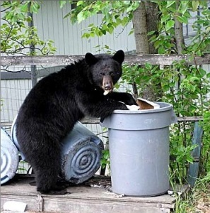 garbage_bear_3
